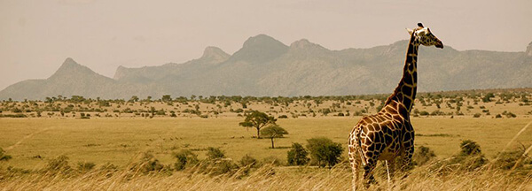 Kidepo Valley National Park Plains